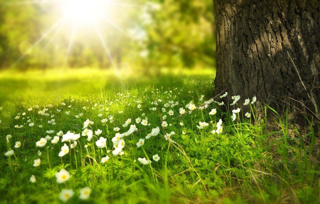 Blumenwiese GHG Alzenau